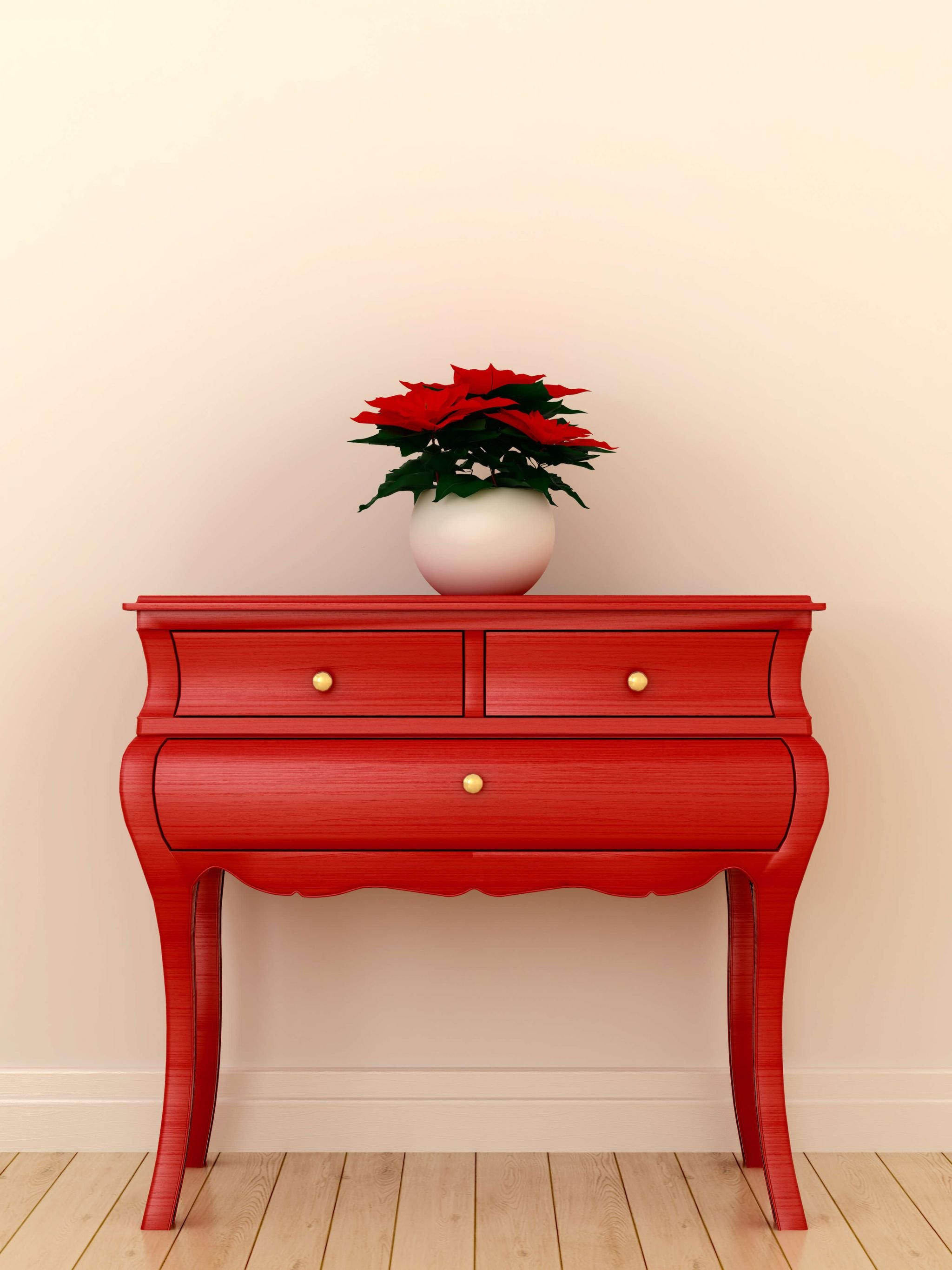 Poinsettia care - red poinsettia on a red cabinet
