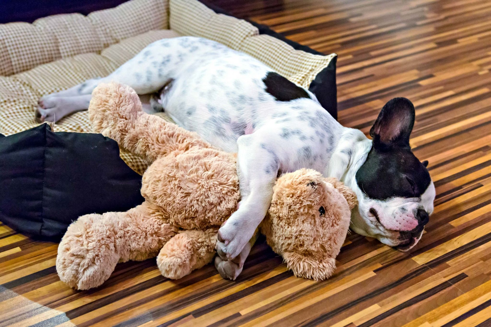 keep your house clean with pets - cute puppy snoozing whilst cuddling his teddybear