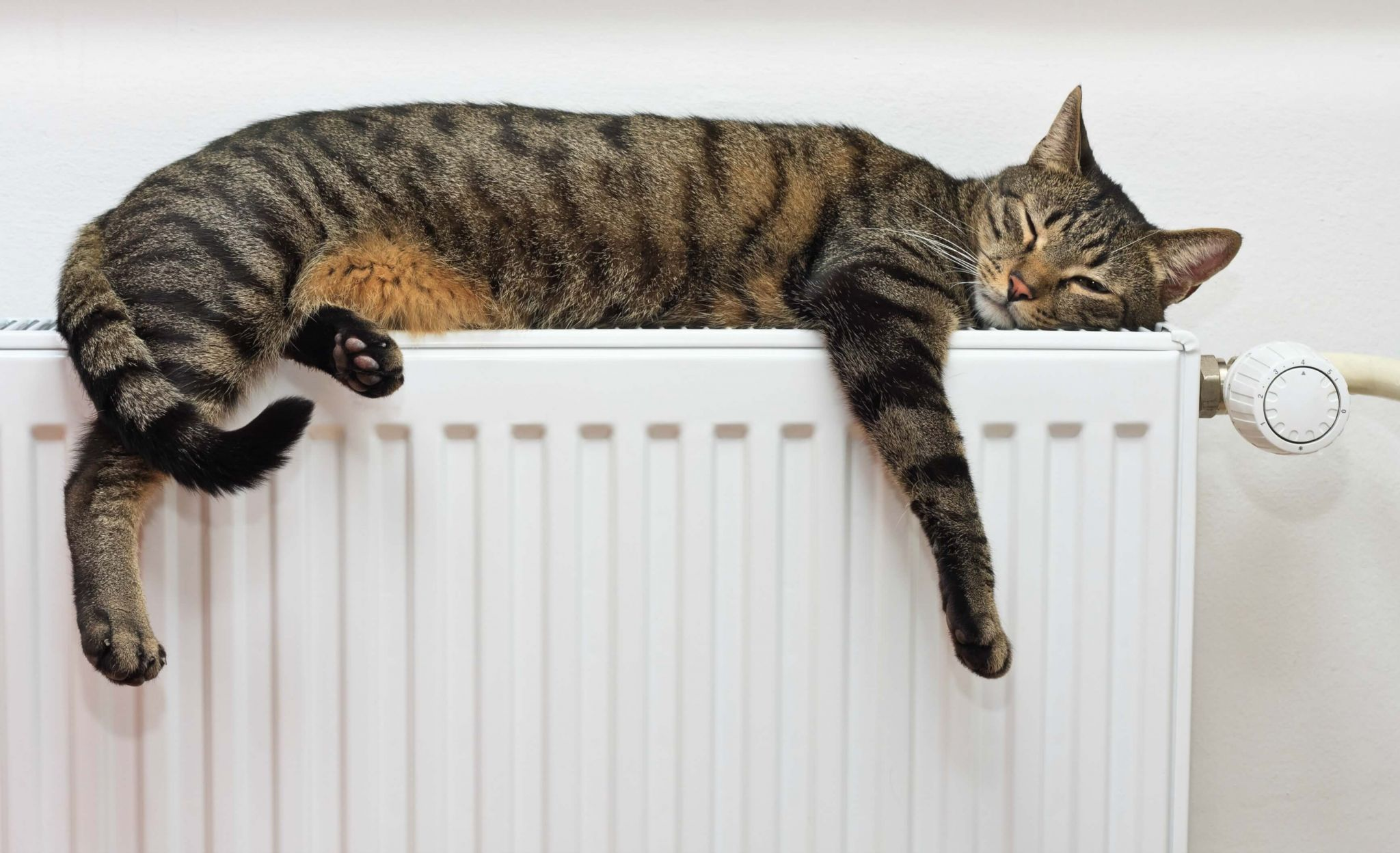 keep your home clean with pets - adult cat snoozing on a white radiator