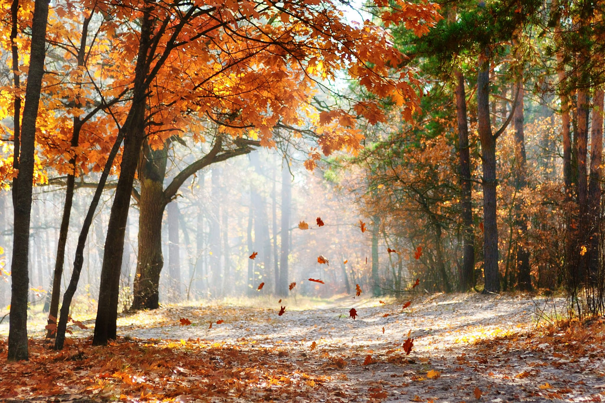 save on your energy bills - autumn woodland scene