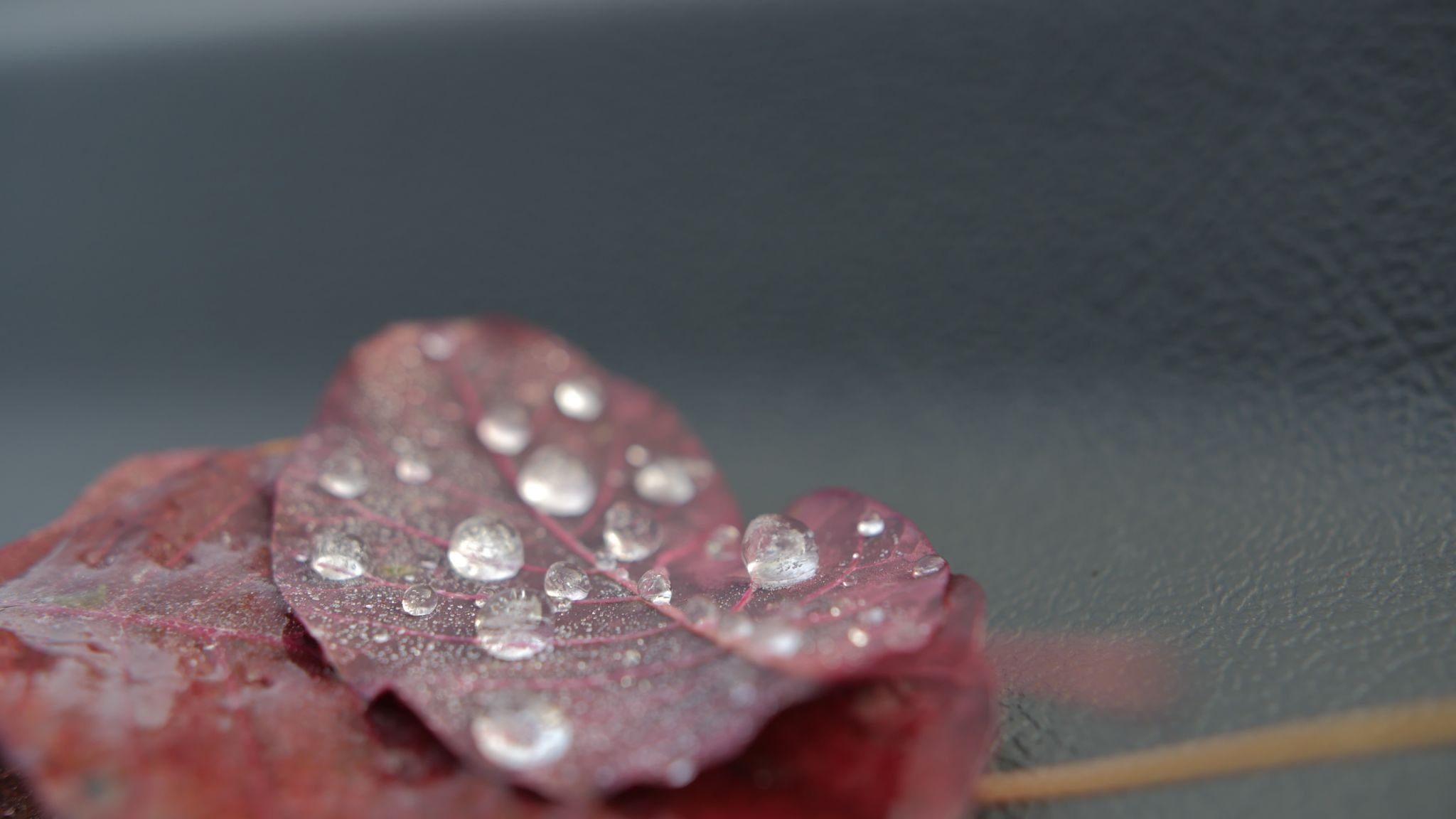 Mother Distracted Problem Page - Agony Aunt Online - dewdrop on an autumnal leaf
