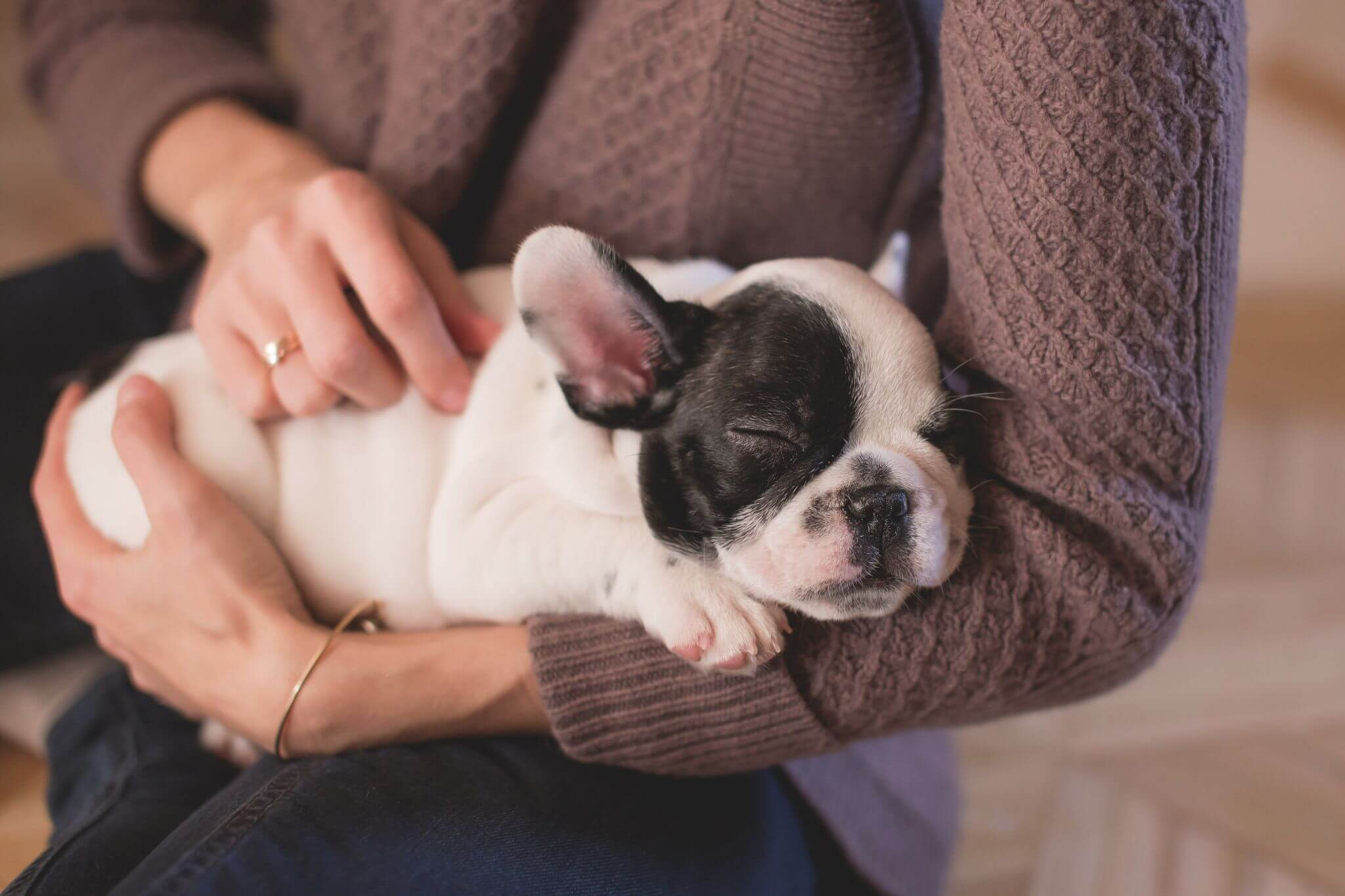 pet insurance is important to avoid any nasty financial shocks - puppy snuggling in woman's arms