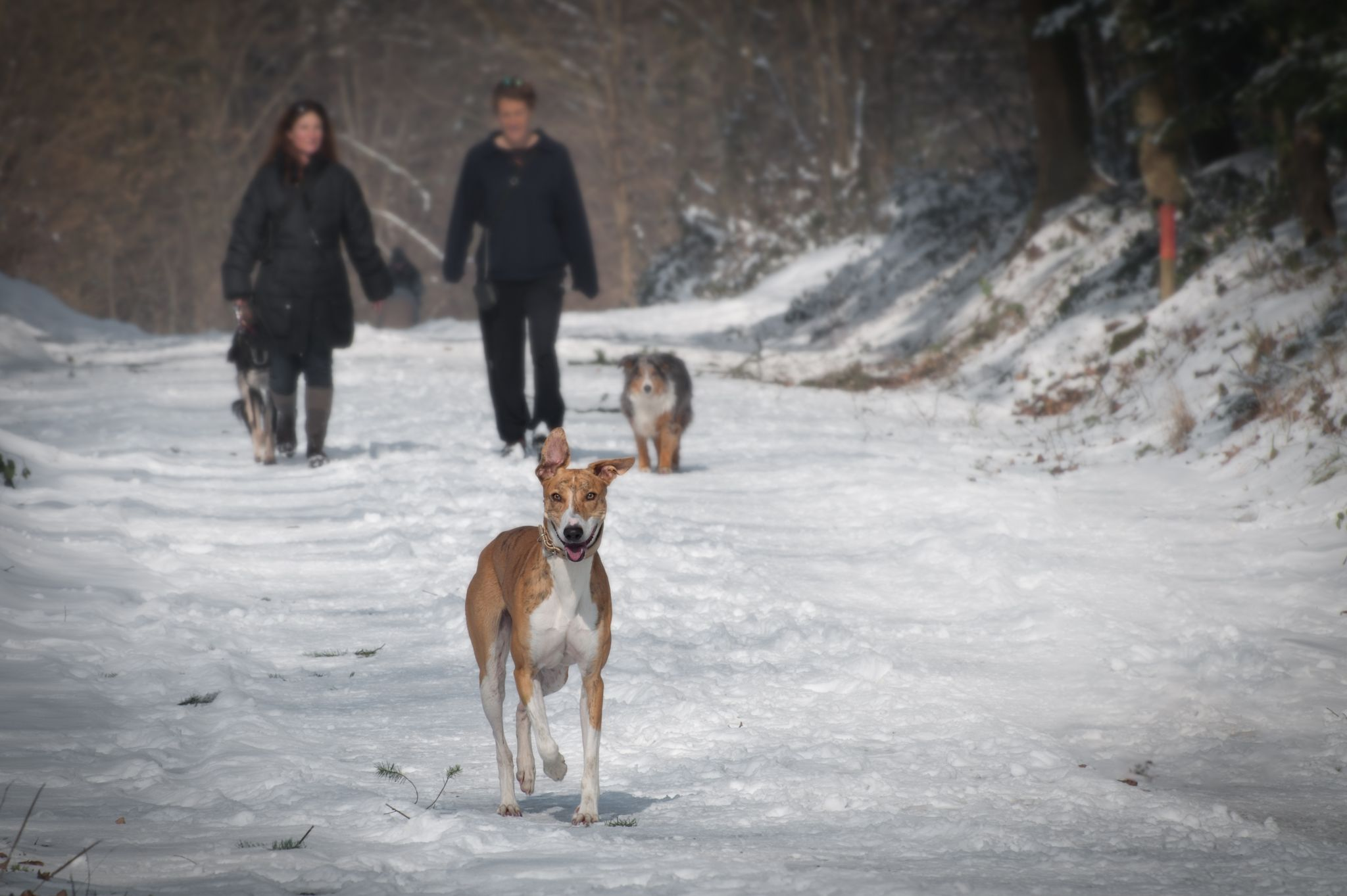 Man and woman walking dogs in the snow - can you get your ex back using the law of attraction?