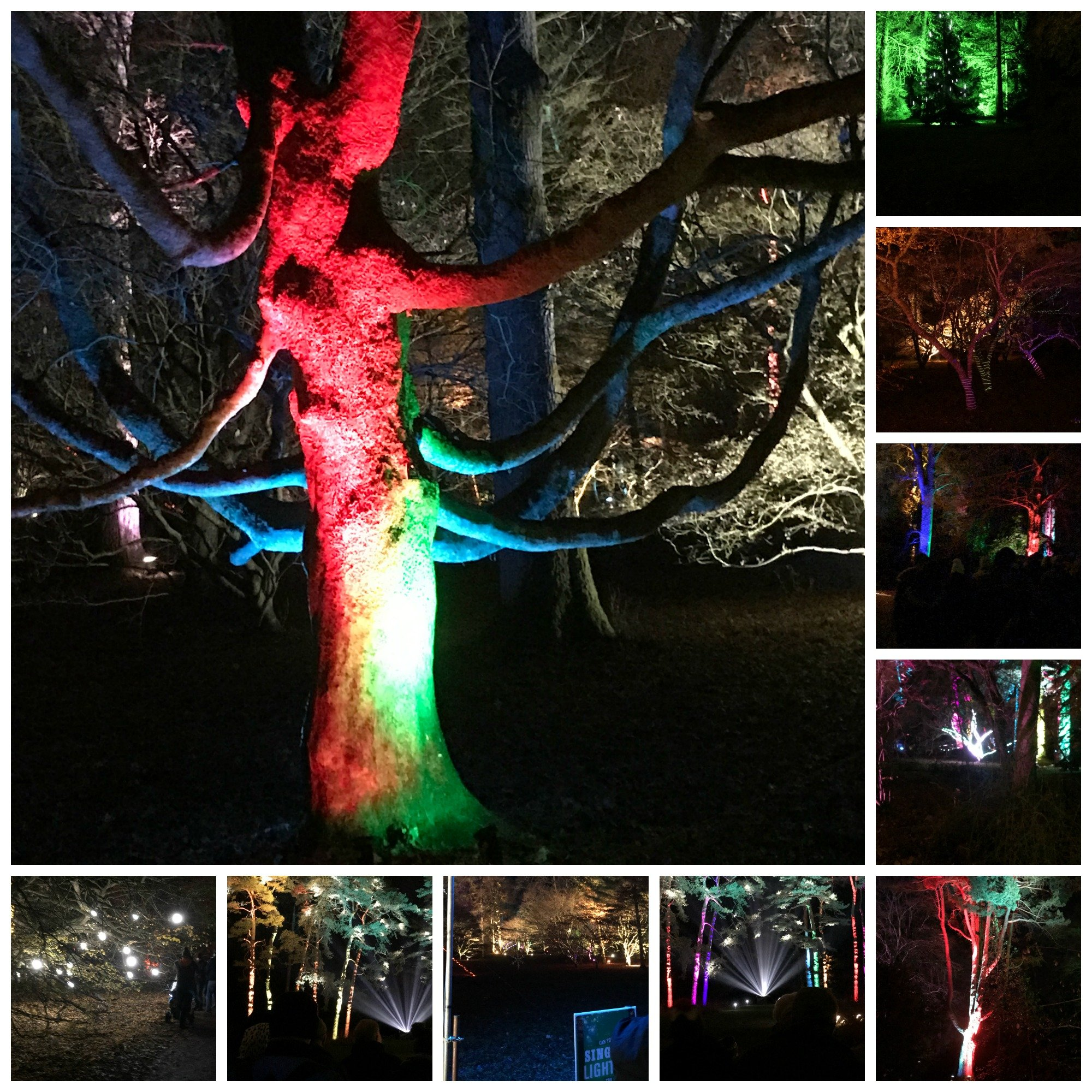Beautifullly lit scenes in the trees at Westonbirt Arboretum Enchanted Christmas Trail 2017