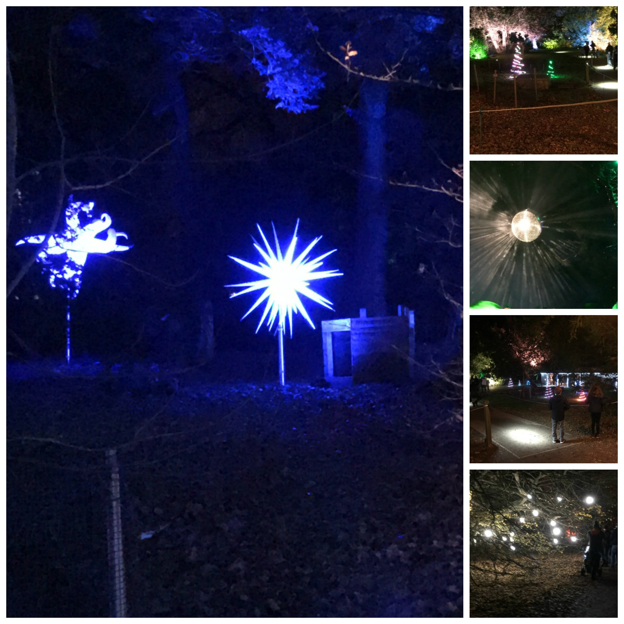 Impressive light displays at Westonbirt Arboretum Enchanted Christmas Trail 2017