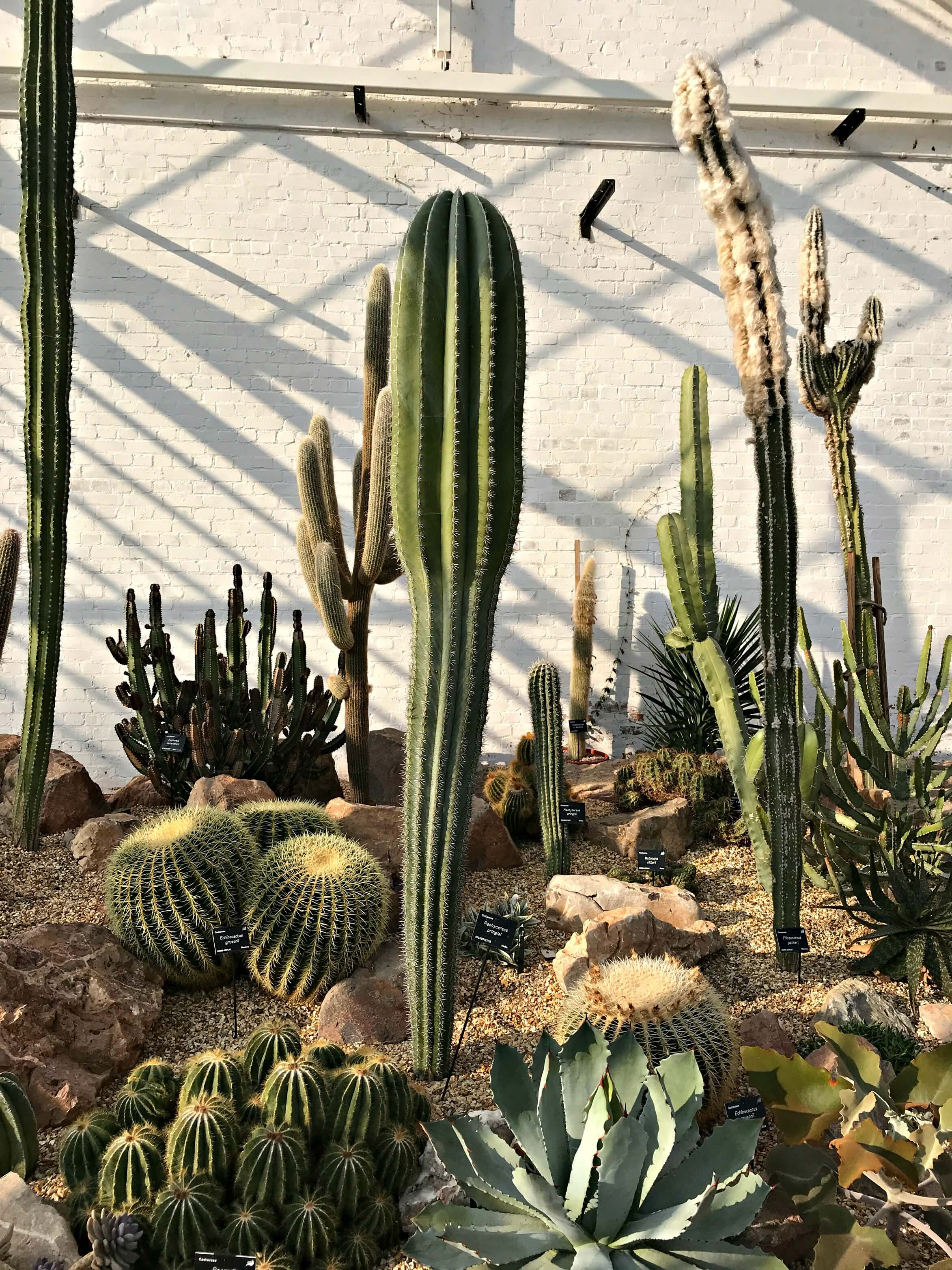 Cacti at Dyffryn Gardens - Oreo Cookie Quest