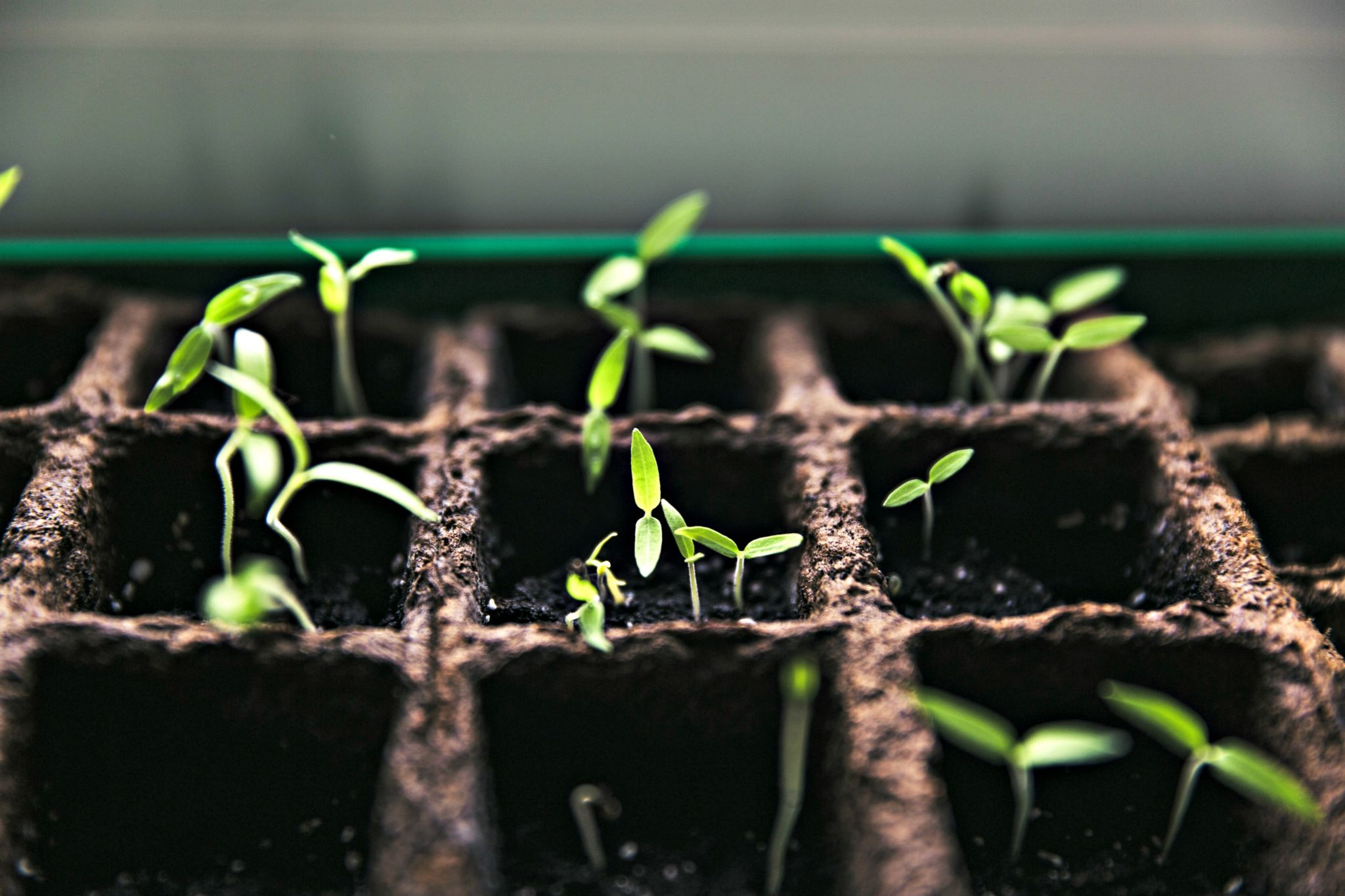 Half term fun could be getting out into the garden and growing some vegetables from seed