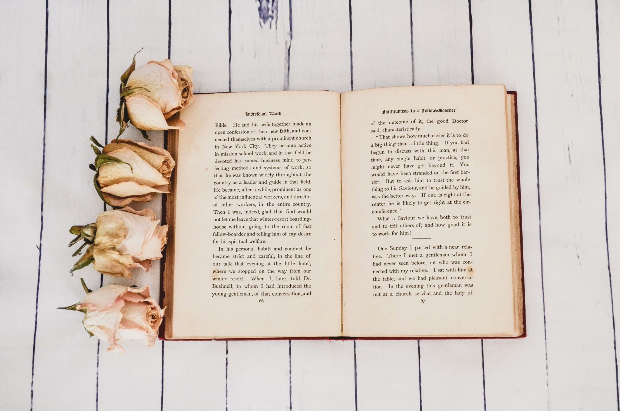 free and bargain books - open book on whitewashed floor surrounded by dried roses