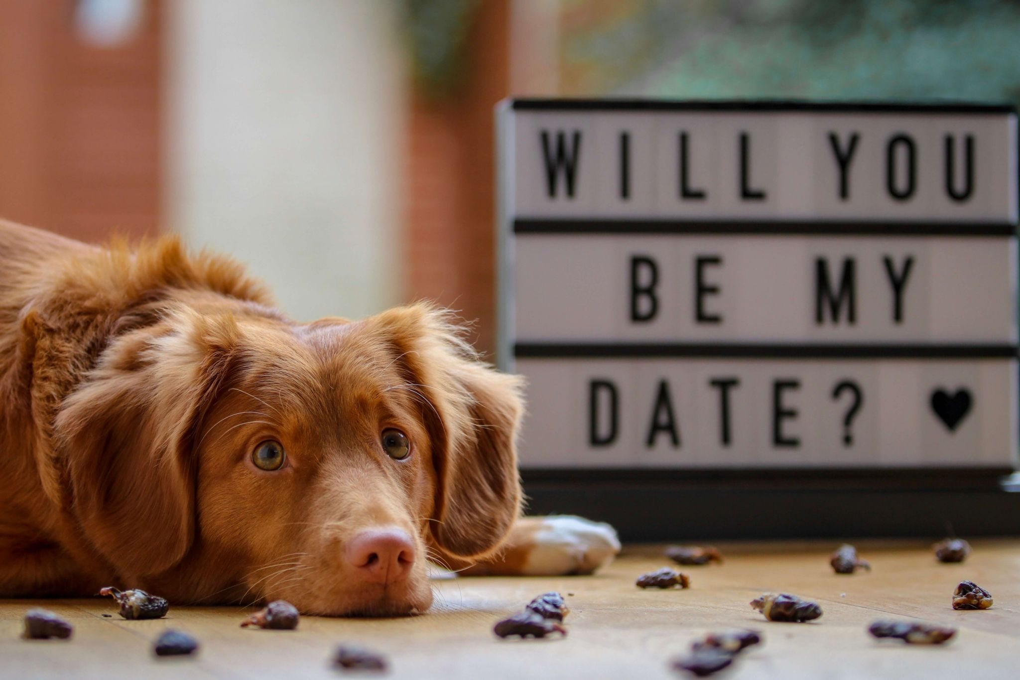 problem page edition 24 - dog next to a sign saying will you be my date?